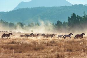 Horses running in a herd