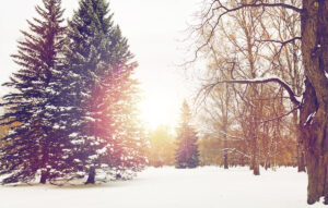 Winter forest scene with the sun shining through